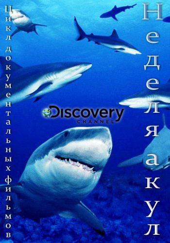 Неделя акул - Shark Week