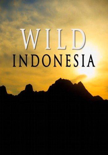 Дикая природа Индонезии - Wild Indonesia