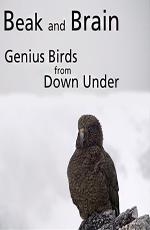 ���� � ����. ���������� ����� - Beak and Brain - Genius birds from Down Under