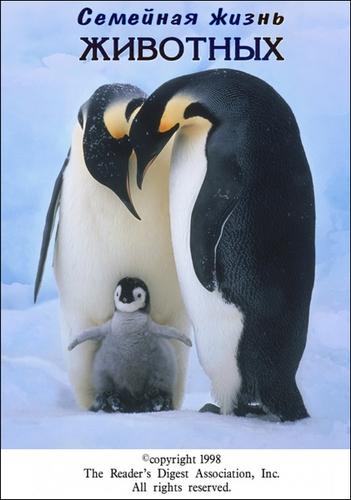 Семейная жизнь животных - Family life of animals