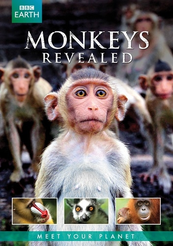 �� � ���� ������� - Monkeys Revealed