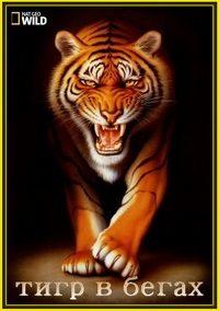 Тигр в бегах - Tiger On The Run