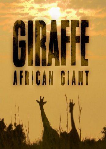 Жираф: Африканские гиганты - Giraffe. African Gian
