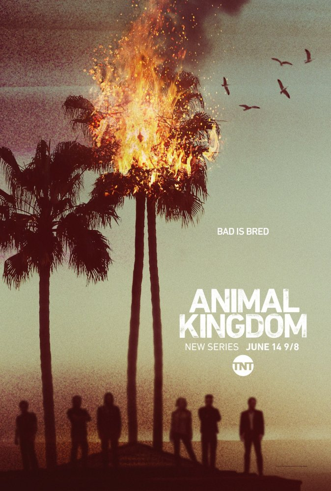 По волчьим законам - Animal Kingdom