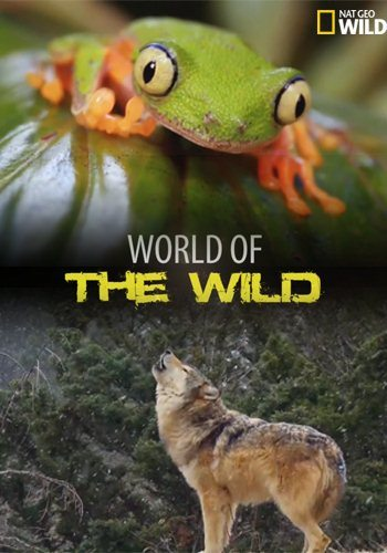 ��� ����� ������� - World of the Wild