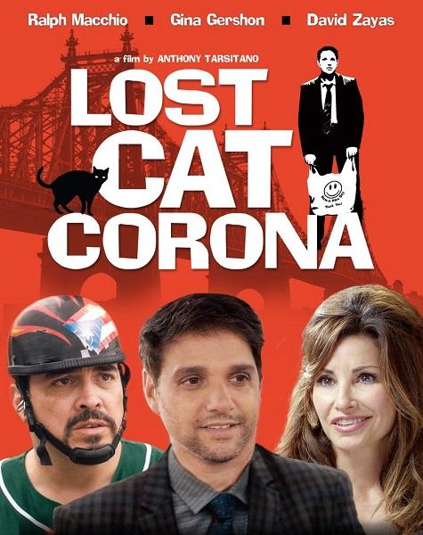 В Короне пропал кот - Lost Cat Corona