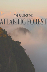 Пульс Атлантического леса - The Pulse of the Atlantic Forest