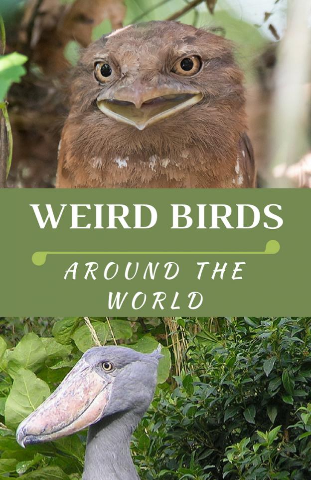 Самые странные животные в мире: лучшее - World's Weirdest Animal Faces
