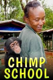 Школа для шимпанзе - Chimpschool