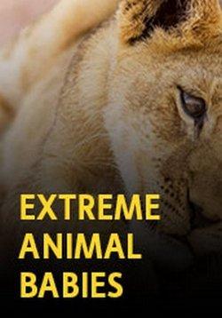 Малыши-экстремалы - Extreme babies animal
