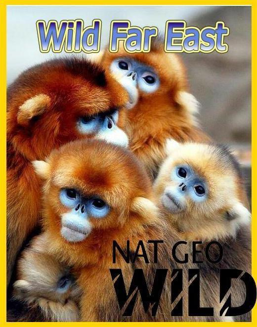Дикая природа Дальнего Востока - Wild Far East