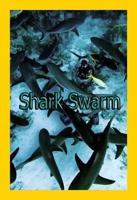 Полчища акул - Shark Swarm