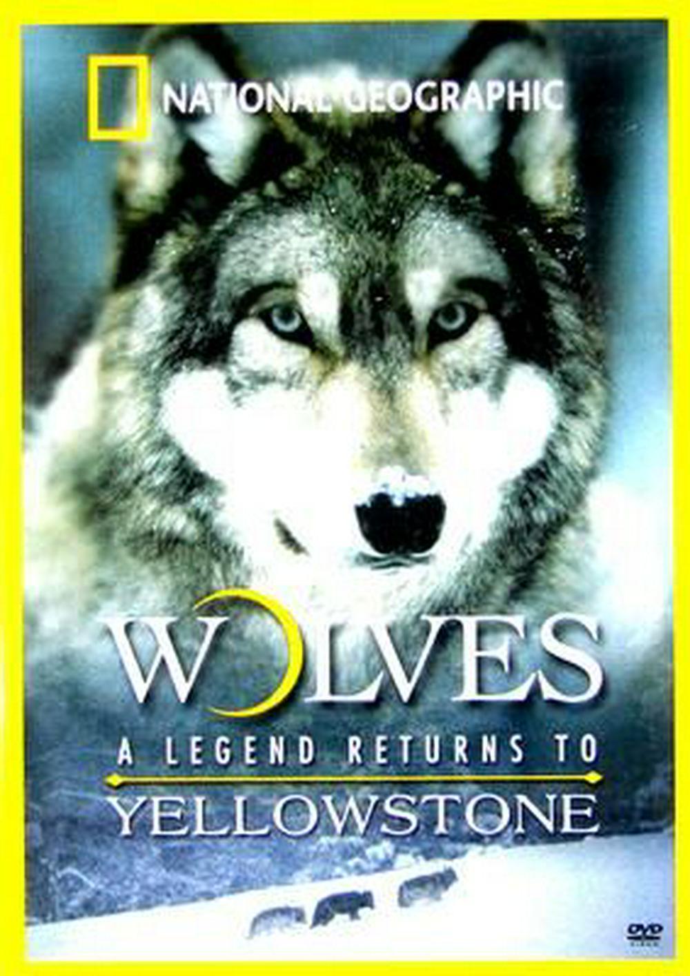 Волчья династия Йеллоустоуна - Yellowstone Wolf Dynasty