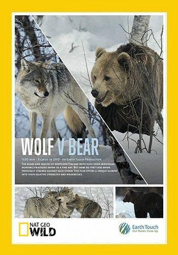 Волк против медведя - Wolf vs. Bear