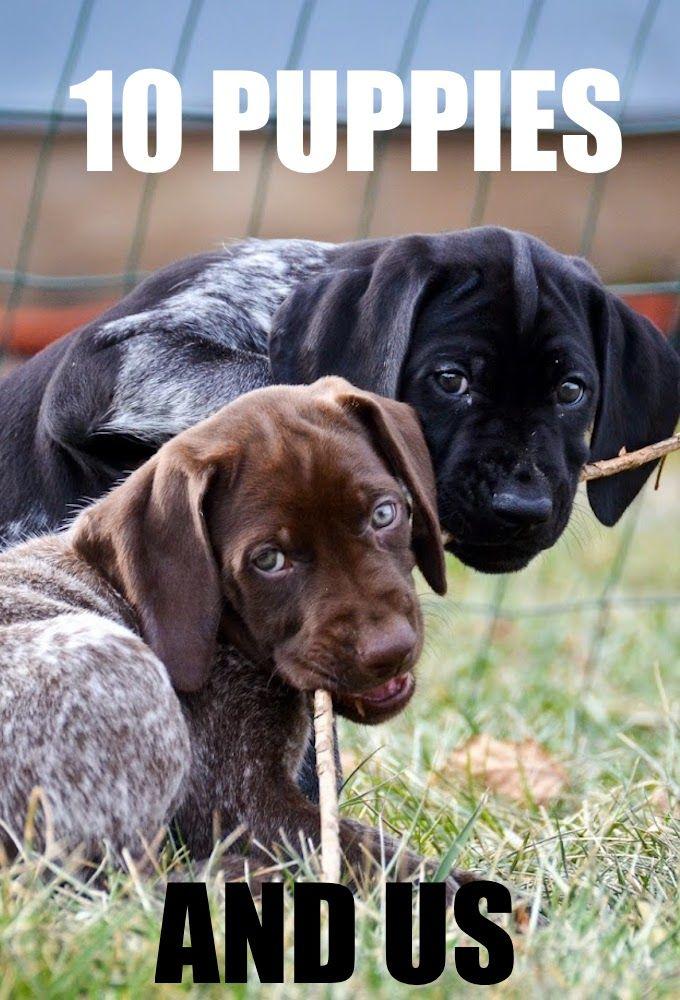 10 щенков и все остальные - Ten Puppies and Us