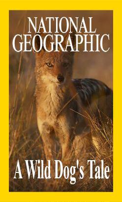 История одной гиеновой собаки - A Wild Dog°s Tale