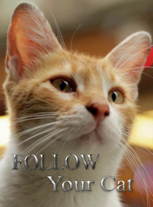По следам вашей кошки - Follow Your Cat