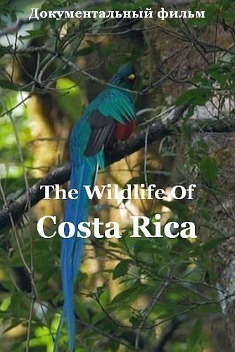 Радужный мир природы Коста-Рики - The Wildlife Of Costa Rica