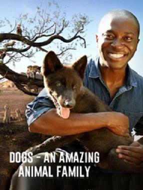 Удивительное семейство псовых - Dogs- An Amazing Animal Family
