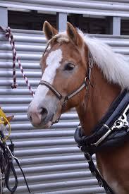 Тяжеловозы - Draft Horse