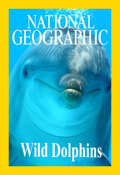 Дикие дельфины - Wild Dolphins