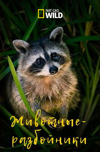 Изгои среди животных - Animal Outlaws