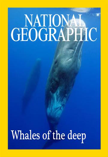 Глубоководные киты - Whales of the deep