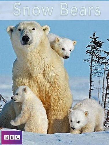 BBC. Снежные медведи - Snow Bears
