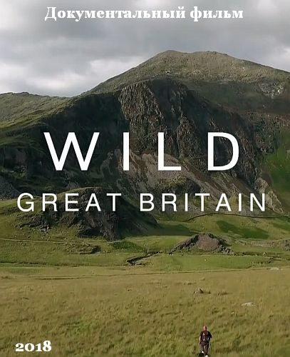 Дикая природа Великобритании - Wild Great Britain