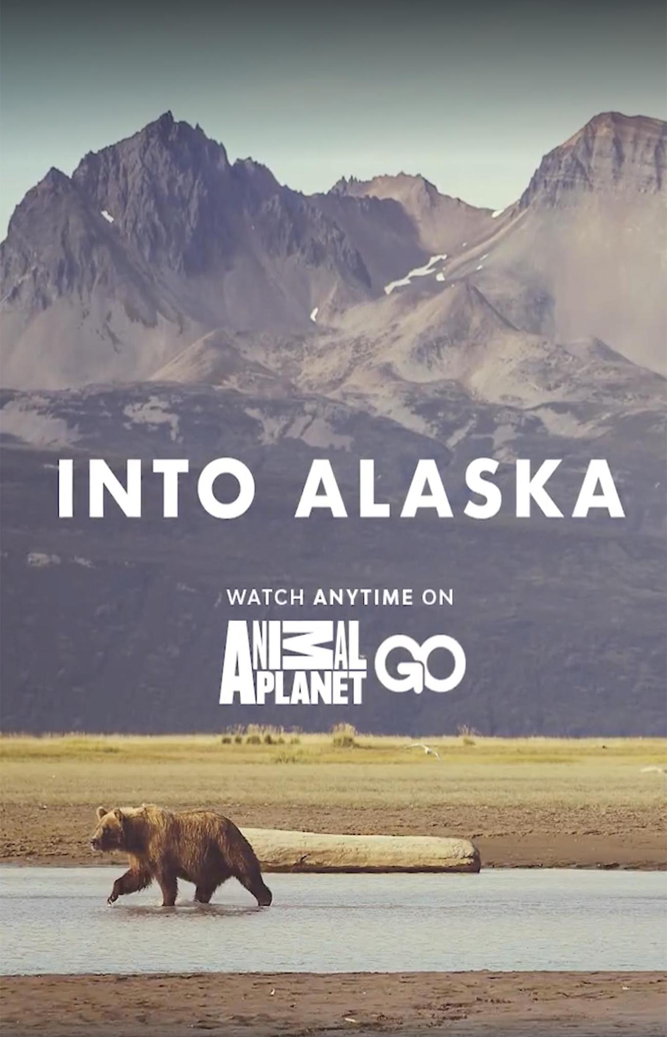 Заповедная Аляска - Into Alaska