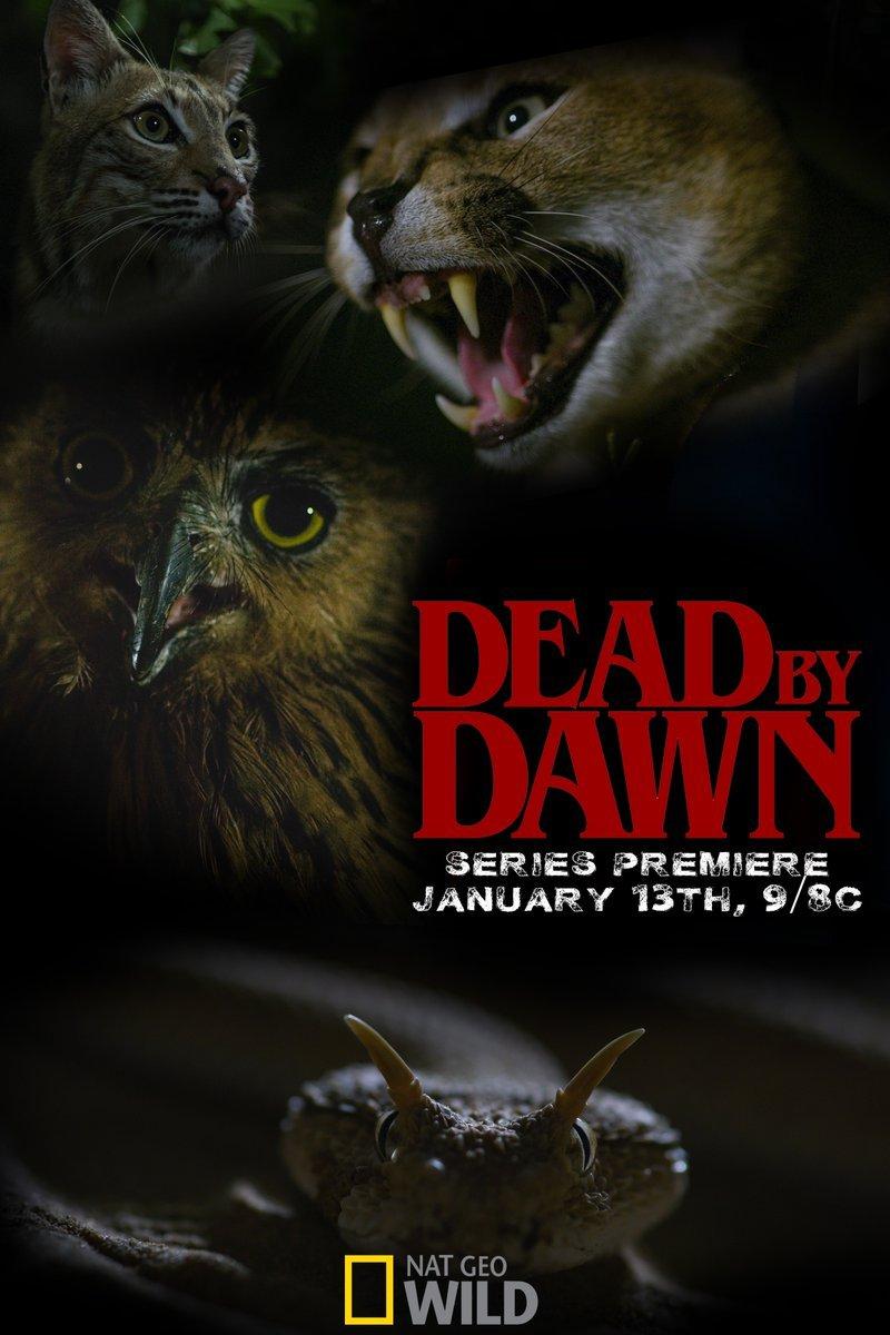 Дожить до рассвета - Dead by Dawn