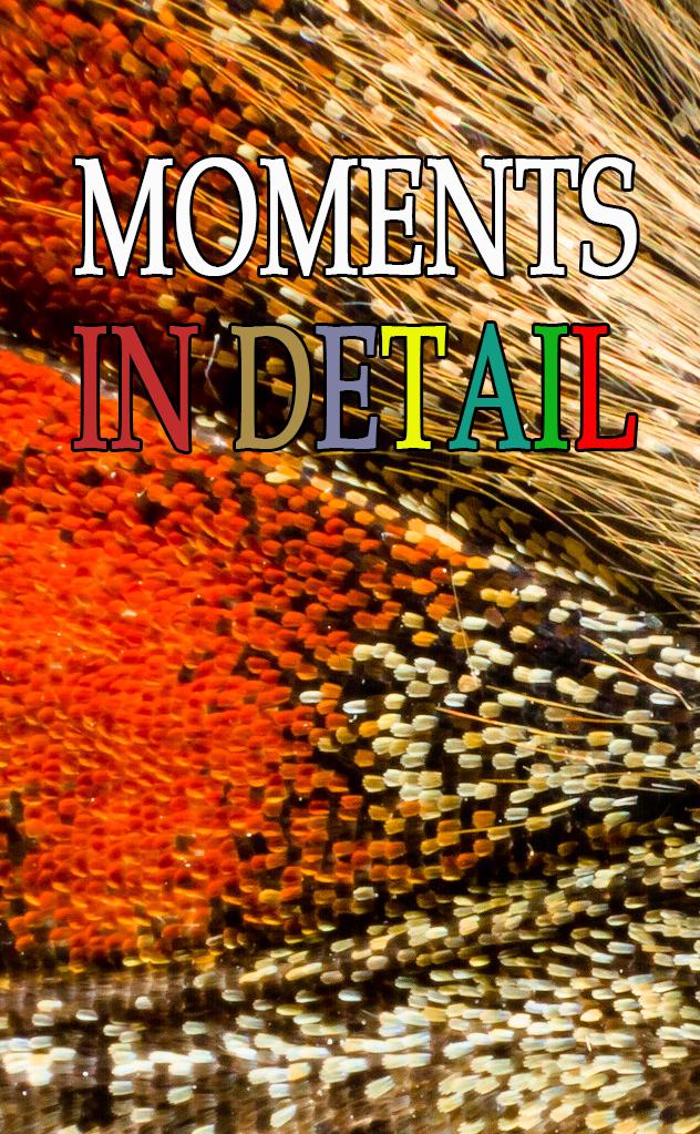 Моменты в деталях - Moments in Detail