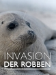 Ластоногие: тучные задиры - Invasion der Robben